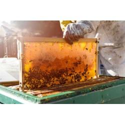Miel natural de abejas de la Sierra de Grazalema. De la colmena a tu mesa